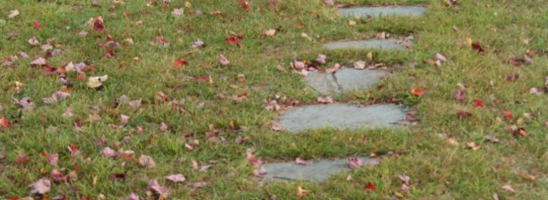 cropped-cropped-dsc01953.jpg