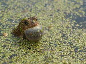 bull-frogs-sing-to-the-skies-the-dark-rift-draws-nigh-all-reptiles-vibrate-the-oceans-and-seas-to-protect-earths-magnetic-field